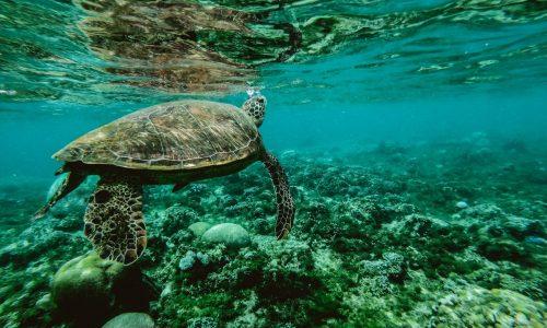 animal-aquatic-corals-847393-min